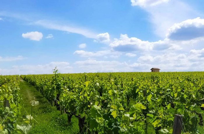Bordeaux vineyards and wine linguistic stay